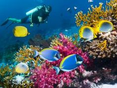 Check out these diving hot spots for the best underwater views in Belize.