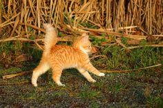 Cat, Kitten, Cat Baby, Young Cat