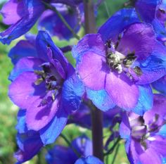July birth month flowers and their meanings, larkspur, water lily from The Old Farmer's Almanac.