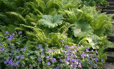 Blattschmuckpflanzen: Faszinierende Farne
