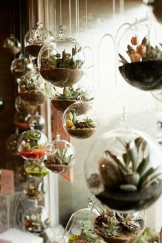 "Just love this look for some reason (maybe a ""living"" window treatment?) ...and have the perfect spot to hang them - gotta get to work: find the supplies I have, the ones I need, take cuttings off my larger succulents......"