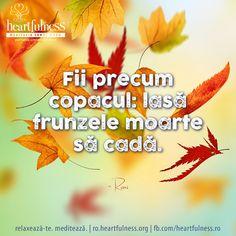 Fii precum copacul: lasă frunzele moarte să cadă. ~ Rumi #heartfulness   #cunoaste_cu_inima   #hfnro Heartfulness Romania - Google+