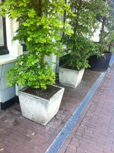 Planten bak voor herenhuis