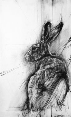APRIL COPPINI // I love this hare, so many directional lines. It seems that the hare is being aware in multiple directions, ready to move in any of those directions. Animal Paintings, Animal Drawings, Art Drawings, Jack Rabbit, Rabbit Art, Charcoal Art, Charcoal Drawing, Lapin Art, Creation Art