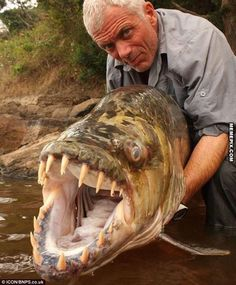 Goliath Tigerfish, River Monsters with Jeremy Wade.... And this is why I don't like to swim in water that I cannot see what's beneath me