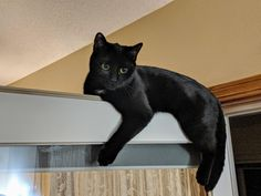 Kylo just relaxing on top of a door;