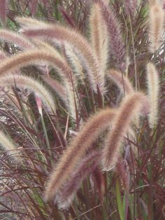 ornamental grass.  Full to part shade. No maintenance.