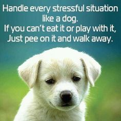 Handle every stressful situation like a dog. If you can't eat it or play with it, just pee on it and walk away. – Quotes Lover