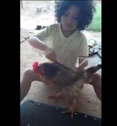 This Video Of A Little Girl Grooming A Chicken Has Gone Strangely,�