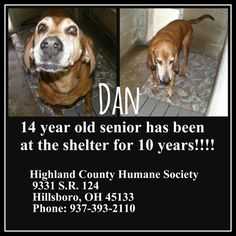 10 years of his life spent abandoned in a shelter! DON'T BREED, DON'T BUY! ADOPT! Please.