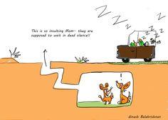Desert Foxes