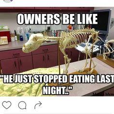 "vetgirlontherun: "" This happen to anyone else too? #vetmed #vettech #vetstudent #vetschool #veterinary #veterinarian """