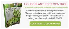 Are houseplant pests buggin' you? Then you need this eBook! Houseplant Pest Control: The Essential How-To Guide For Battling Bugs On Indoor Plants Slugs In Garden, Garden Pests, Garden Fertilizers, Scale Insects, Bees And Wasps, Pest Control Services, Beneficial Insects, Neem Oil, Humming Bird Feeders
