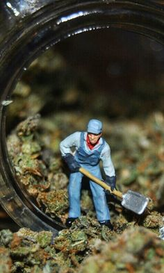 This Miniature World Of Weed Is Blowing Up Big Time On Instagram