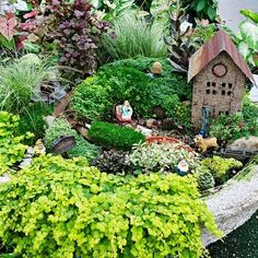 ideal plants for a fairy garden. One day I will have a fairy garden Fairy Garden Plants, Mini Fairy Garden, Garden Terrarium, Fairy Garden Houses, Gnome Garden, Dream Garden, Fairy Gardening, Succulent Planters, Terrariums