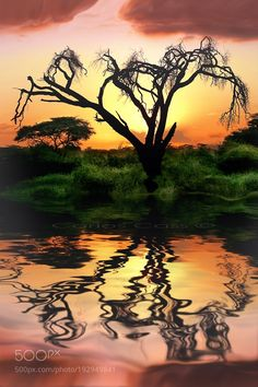 """Tanzania sunset Go to http://iBoatCity.com and use code PINTEREST for free shipping on your first order! (Lower 48 USA Only). Sign up for our email newsletter to get your free guide: """"Boat Buyer's Guide for Beginners."""""""