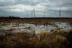 The Great Dismal Swamp was once a thriving refuge for runaways