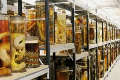 Inside The Natural History Museum's Wonderfully Creepy Room Of Things In Jars