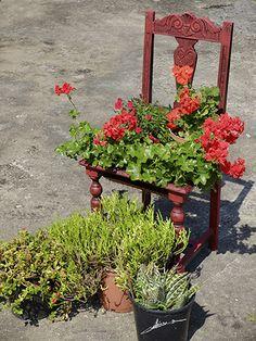 Silla de madera reconvertida en macetero. Wooden chair turned into flowerpot.
