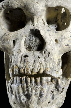 Unique Skull Throws Human Evolution Theories Into Turmoil, 11 Photos And Video
