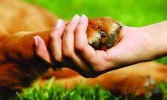 Familia Basset Hound: Cortar as Unhas do seu Cão - É uma tarefa cuidados...