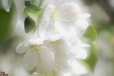 Soft Focus Flower 05 by 7thwordphoto on 500px