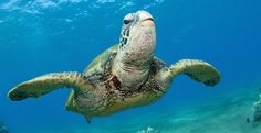 Tell Your Representative: Vote for Healthy Oceans