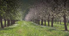 Sandford Orchards is a craft cider maker from the heart of rural Devon. A full working farm dedicated to making the best cider, fresh from the West country. Craft Cider, Juice Maker, Devon, Things To Do, Country Roads, Holiday, Plants, Things To Make, Vacations