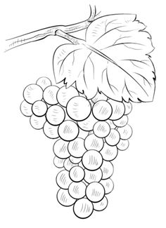 Brunch of grapes Coloring page
