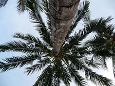 Beste reistijd - Dominicaanse Republiek - Reizendoejezo