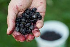 Uses For White Vinegar, Vinegar Uses, Weed Killer Homemade, Pallets Garden, Pallet Gardening, Gardening Tips, Garden Pests, Herbs Garden, Vegetable Garden