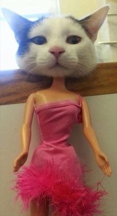 """Hello, my name is Barbie…"""