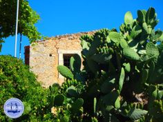 Urlaub in Griechenland kreta - Zorbas Island apartments in Kokkini Hani, Crete Greece 2020 Crete Greece, Hani, Aktiv, Apartments, Island, Plants, Summer, Free, Crete Holiday