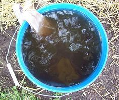 Brew compost Tea The Easy Way: Compost tea is the best fertilizer you can get, and it is totally natural and organic. Brewing this wonderful concoction yourself is an easy way to supercharge your vegetable garden. yard-and-garden Garden Compost, Garden Soil, Lawn And Garden, Garden Plants, Garden Landscaping, Herb Garden, Permaculture, Organic Gardening, Gardening Tips