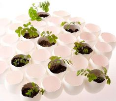 Grow from the eggshells