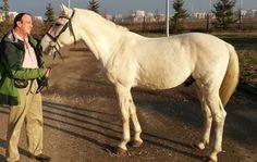 Horses, Butterflies & Surgeons: The Secret to Training Success   Karen Pryor Clicker Training