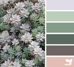 Succulent Hues via Colors palette, plants, green Colour Pallette, Colour Schemes, Color Combos, Design Seeds, Color Concept, Color Balance, Colour Board, Design Furniture, World Of Color