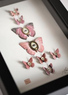 Cabinet of Curiosities Specimen no. 99 The Pink Moth by mabgraves, $185.00
