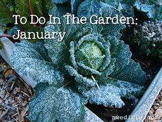 It has been an unusually pleasant January up here in Cascadia - fairly dry and mild - and I've been out in the yard more, tidying and futzing and making a few changes to the layout of the garden. I...