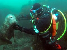 Divers meet extremely playful wild seals off the coast of England, film the whole adventure