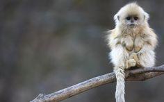 33 Dierenplaatjes die zo lief zijn dat het bijna verboden zou moeten worden | Zoo | Upcoming