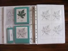 Apologia Botany - More botany materials storage School Room Organization, Teacher Organisation, Educational Activities For Kids, Writing Activities, Plant Science, Life Science, Montessori Science, Montessori Materials, Nature Journal