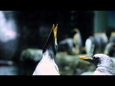 海響館Swimmin' Jazz ~Sessions with Animals of the Sea~ - YouTube
