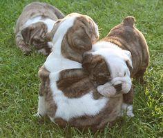 AHHHHHHH!! I want them!!!