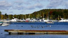 Harbor in Malletts Bay, Vermont.  Love those geese!