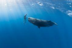 Завладяваща подводна фотография