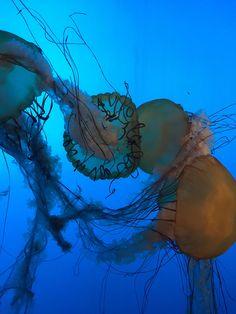 Underwater photo by Chris lee
