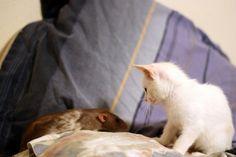 gato e rato