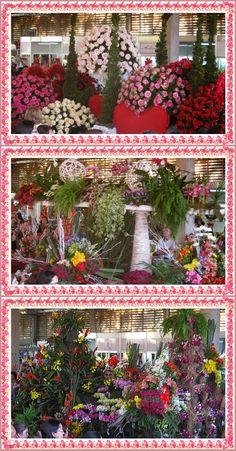 Desfile dos carros de flores, expoflora, Holambra.