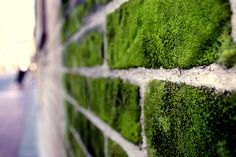 Now this moss brick wall is exactly what I would like across the front of our property.